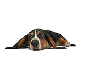 dog heartworm symptoms