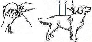 Advantage Multi for Dogs