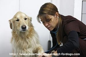 dog health insurance