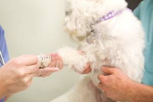 parvovirus treatment