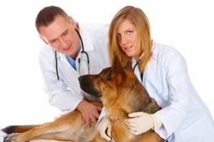dog being examined