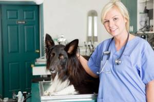 an annual heartworm test for all dogs is recommended